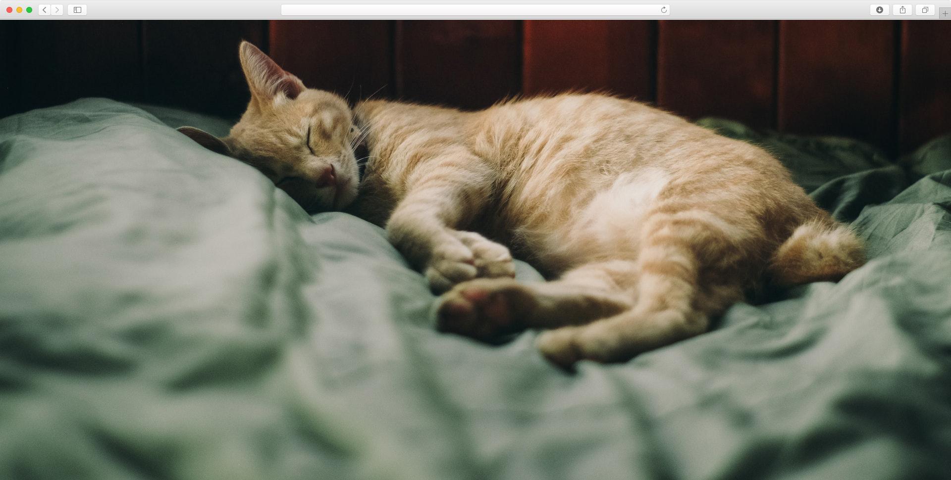 kot na legowisku dla kotów